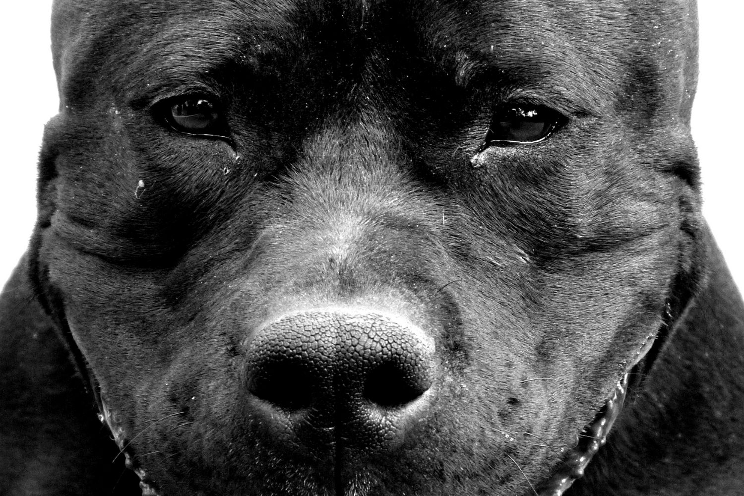 GuardianMPS dog bite blog header fierce dog_large
